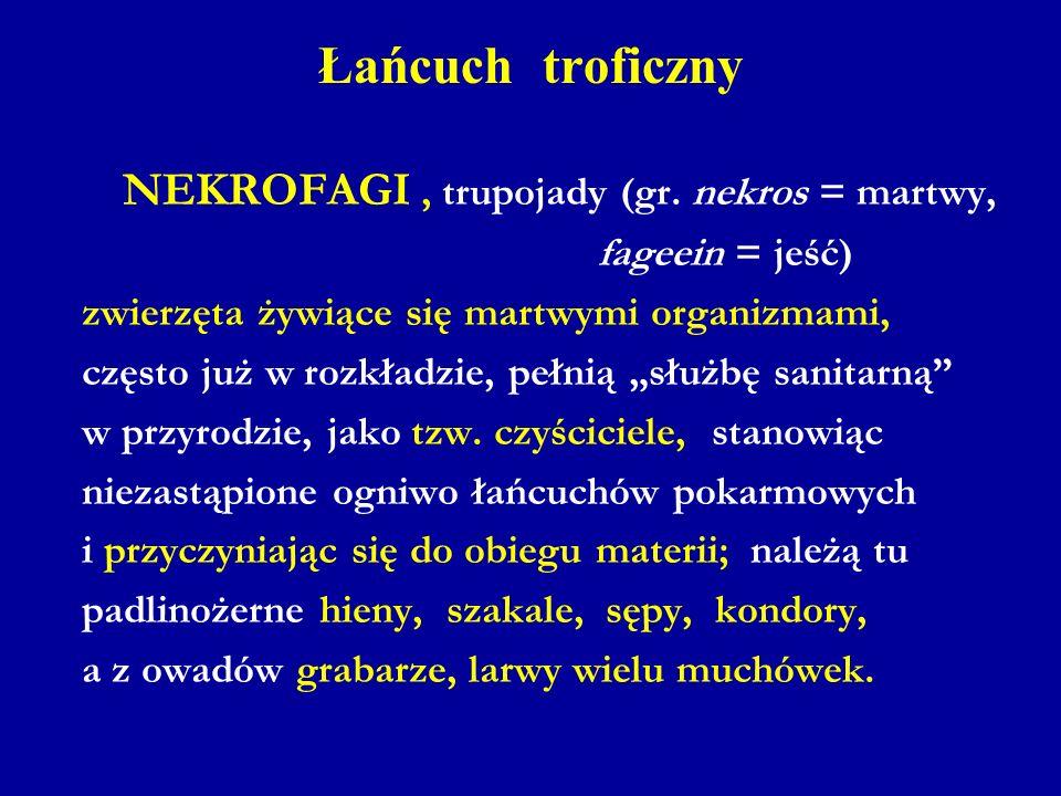 Łańcuch troficzny NEKROFAGI , trupojady (gr. nekros = martwy,