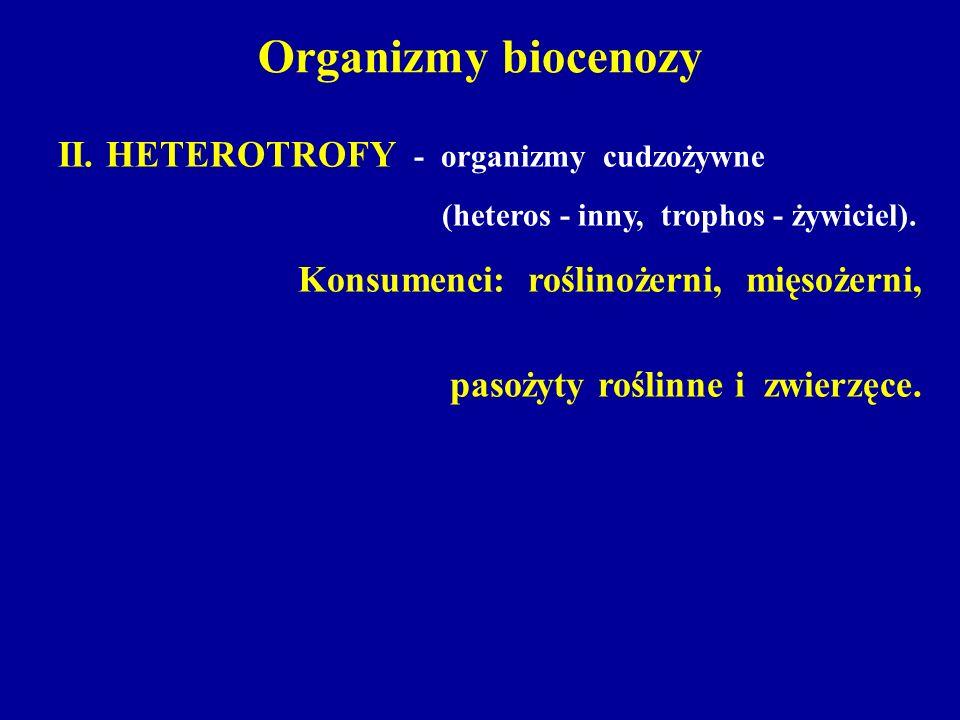Organizmy biocenozy II. HETEROTROFY - organizmy cudzożywne