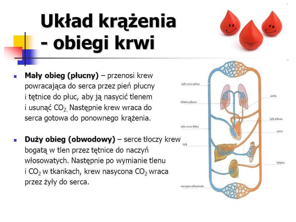 Układ krążenia - obiegi krwi