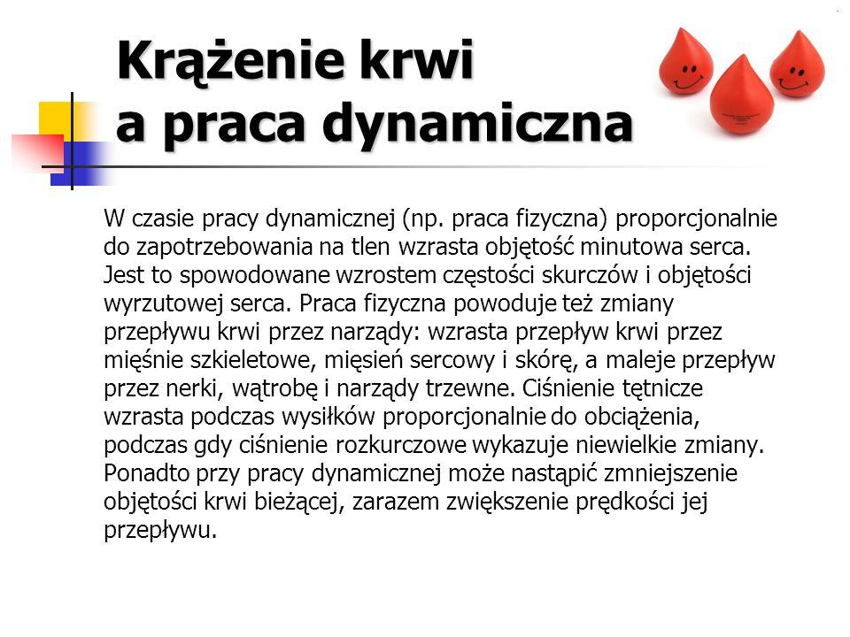 Krążenie krwi a praca dynamiczna