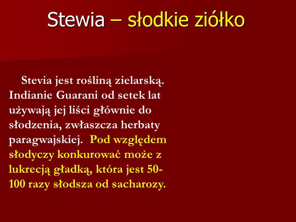Stewia – słodkie ziółko