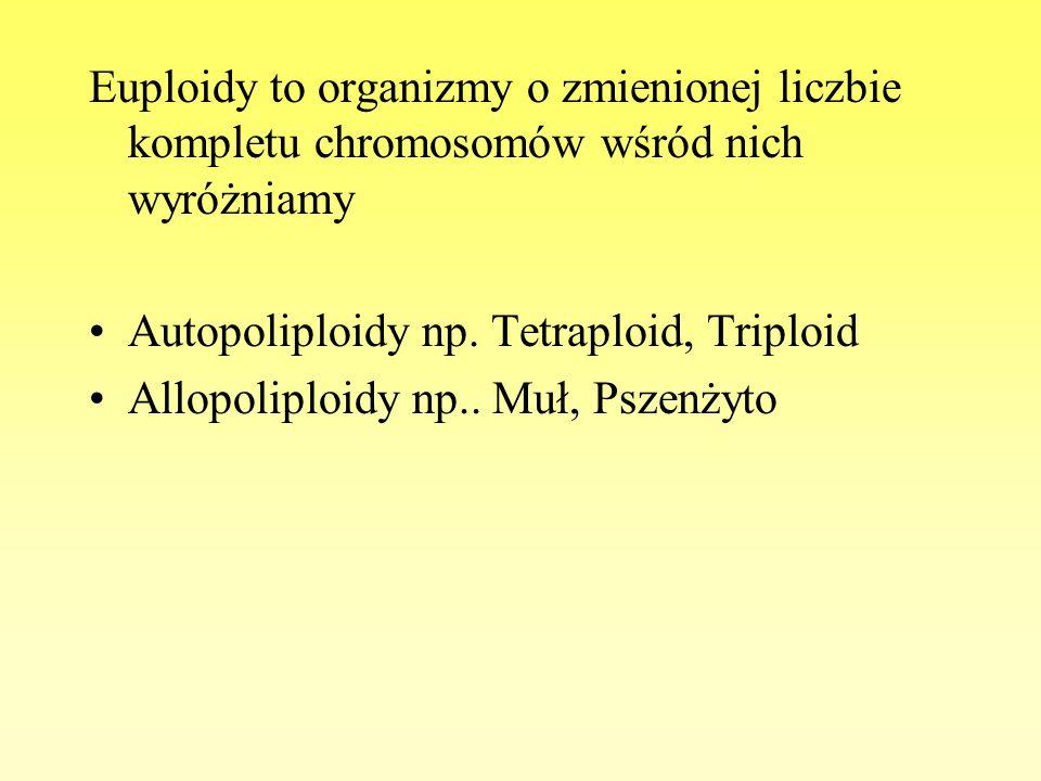 Euploidy to organizmy o zmienionej liczbie kompletu chromosomów wśród nich wyróżniamy