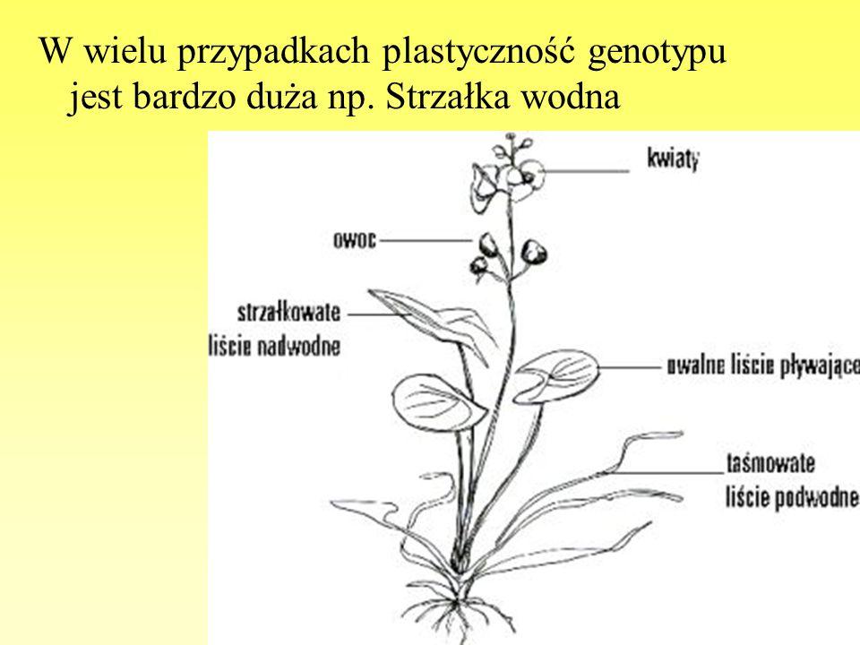 W wielu przypadkach plastyczność genotypu jest bardzo duża np