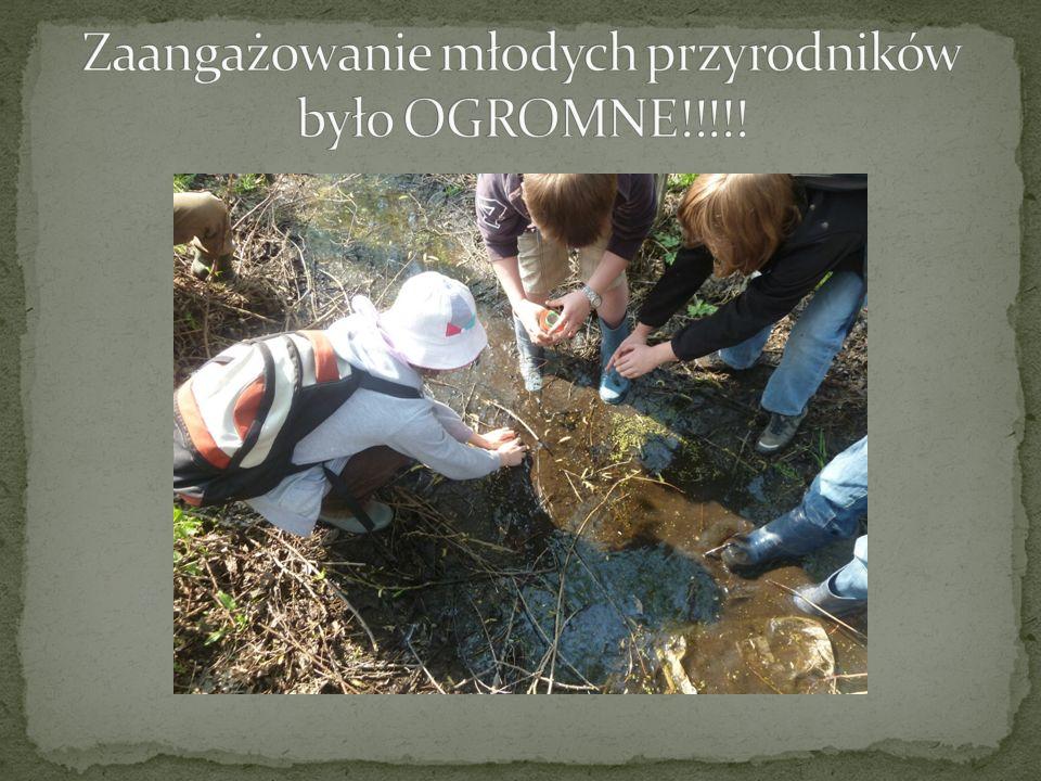 Zaangażowanie młodych przyrodników było OGROMNE!!!!!