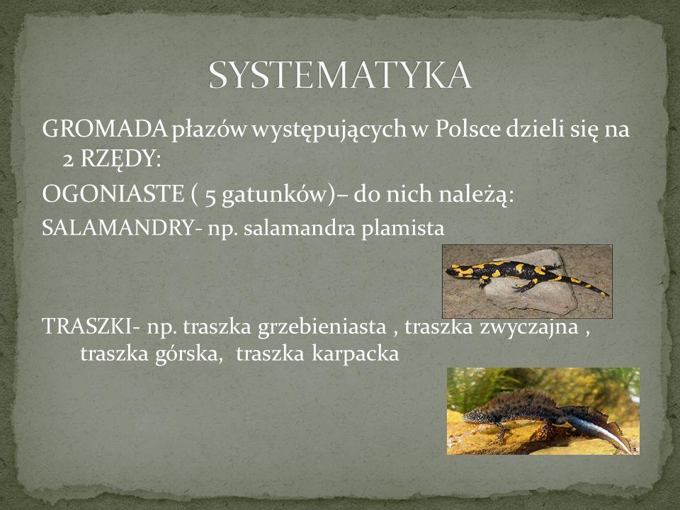 SYSTEMATYKA GROMADA płazów występujących w Polsce dzieli się na 2 RZĘDY: OGONIASTE ( 5 gatunków)– do nich należą: