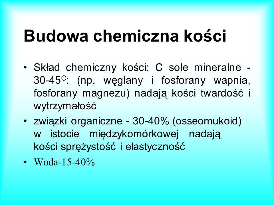 Budowa chemiczna kości