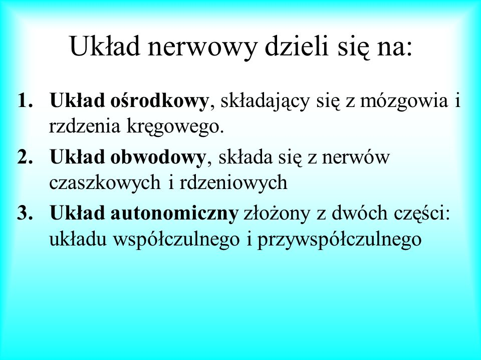 Układ nerwowy dzieli się na: