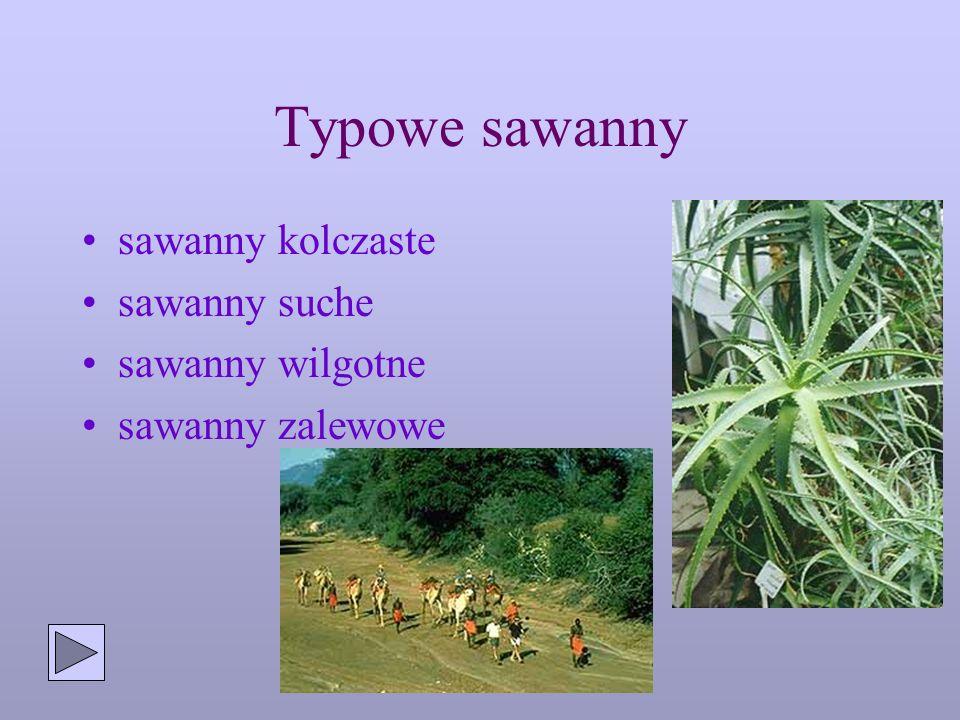 Typowe sawanny sawanny kolczaste sawanny suche sawanny wilgotne