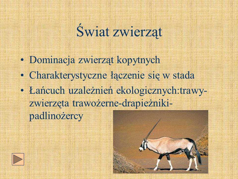 Świat zwierząt Dominacja zwierząt kopytnych