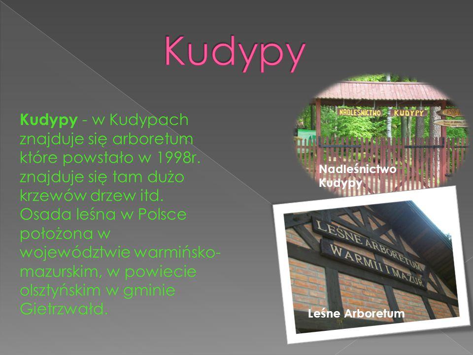Kudypy Kudypy - w Kudypach znajduje się arboretum które powstało w 1998r. znajduje się tam dużo krzewów drzew itd.