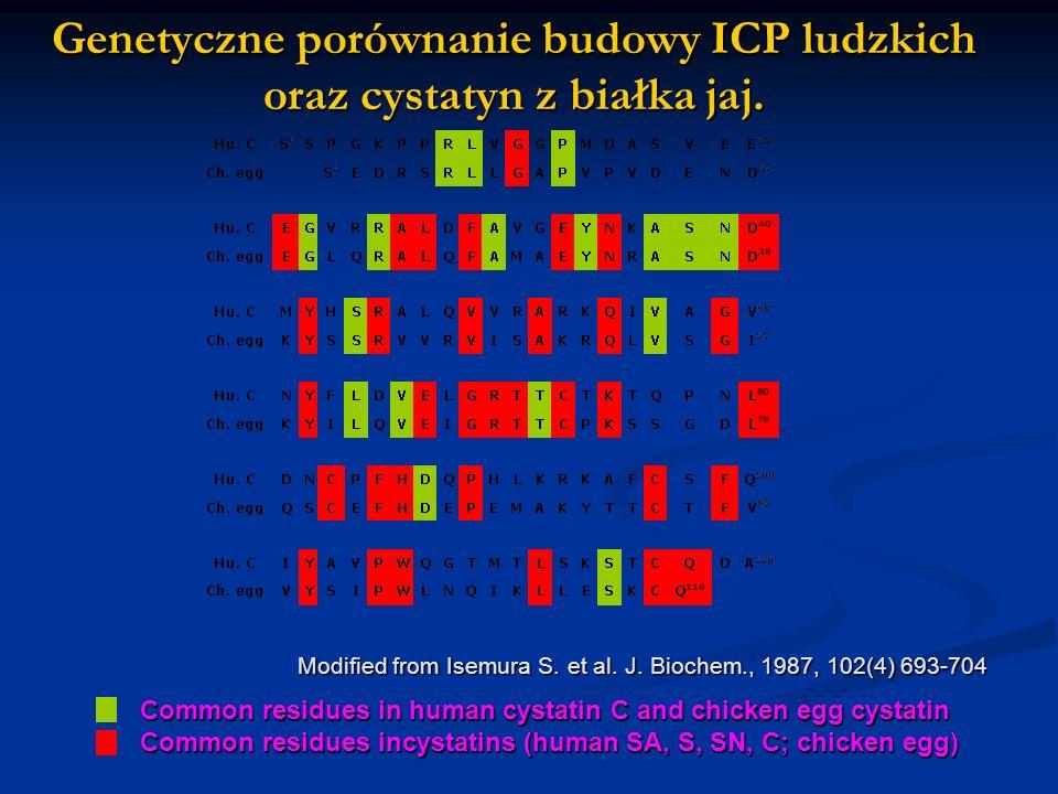 Genetyczne porównanie budowy ICP ludzkich oraz cystatyn z białka jaj.
