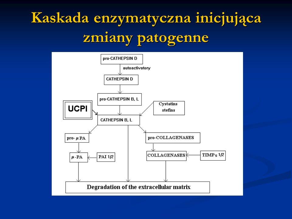 Kaskada enzymatyczna inicjująca zmiany patogenne