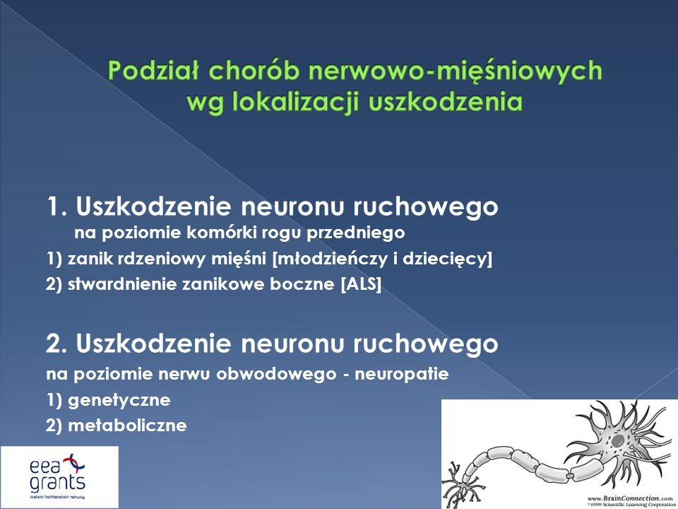 Podział chorób nerwowo-mięśniowych wg lokalizacji uszkodzenia