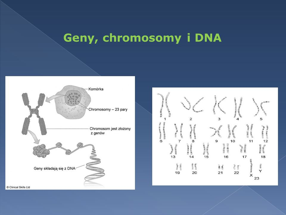 Geny, chromosomy i DNA