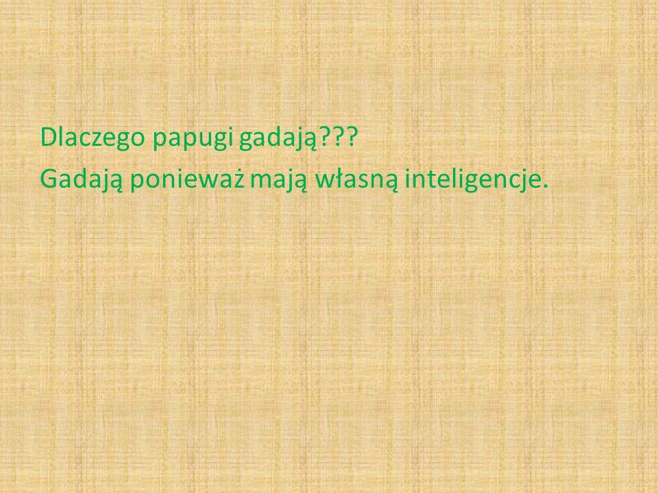 Dlaczego papugi gadają Gadają ponieważ mają własną inteligencje.