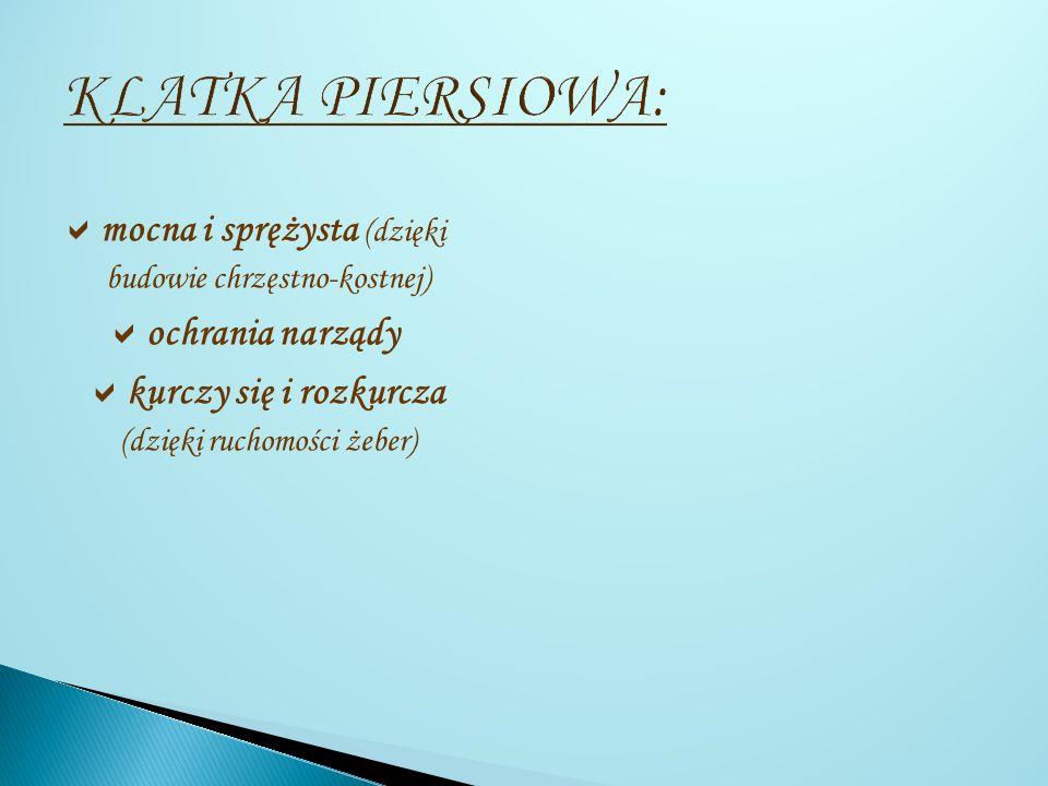KLATKA PIERSIOWA: mocna i sprężysta (dzięki budowie chrzęstno-kostnej) ochrania narządy.