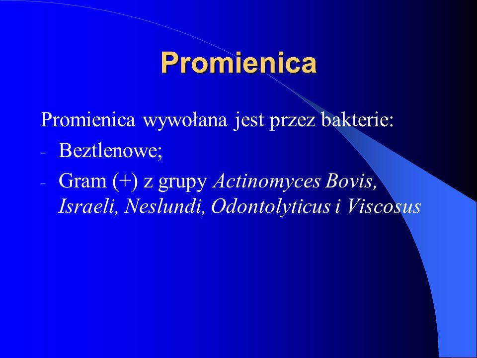 Promienica Promienica wywołana jest przez bakterie: Beztlenowe;