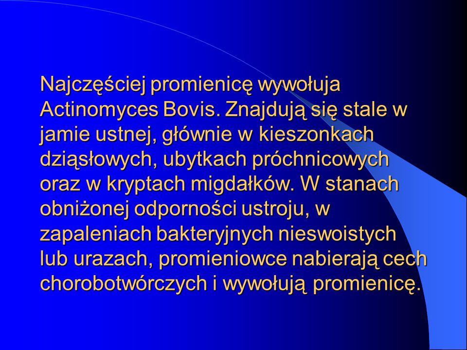 Najczęściej promienicę wywołuja Actinomyces Bovis