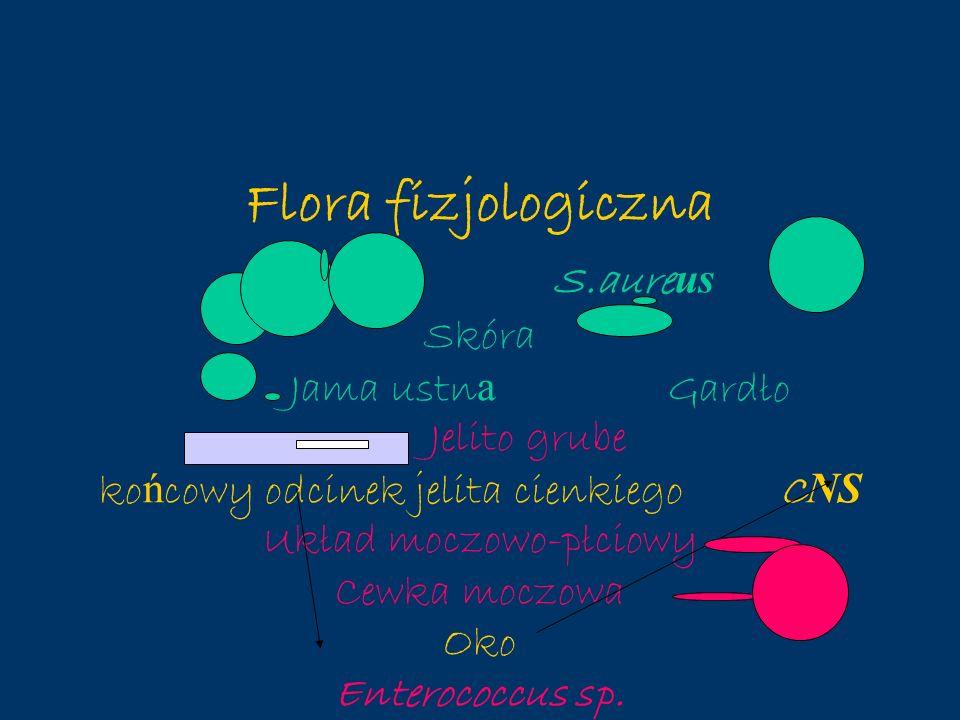 Flora fizjologiczna S.aureus Skóra Jama ustna Gardło Jelito grube końcowy odcinek jelita cienkiego CNS Układ moczowo-płciowy Cewka moczowa Oko Enterococcus sp.