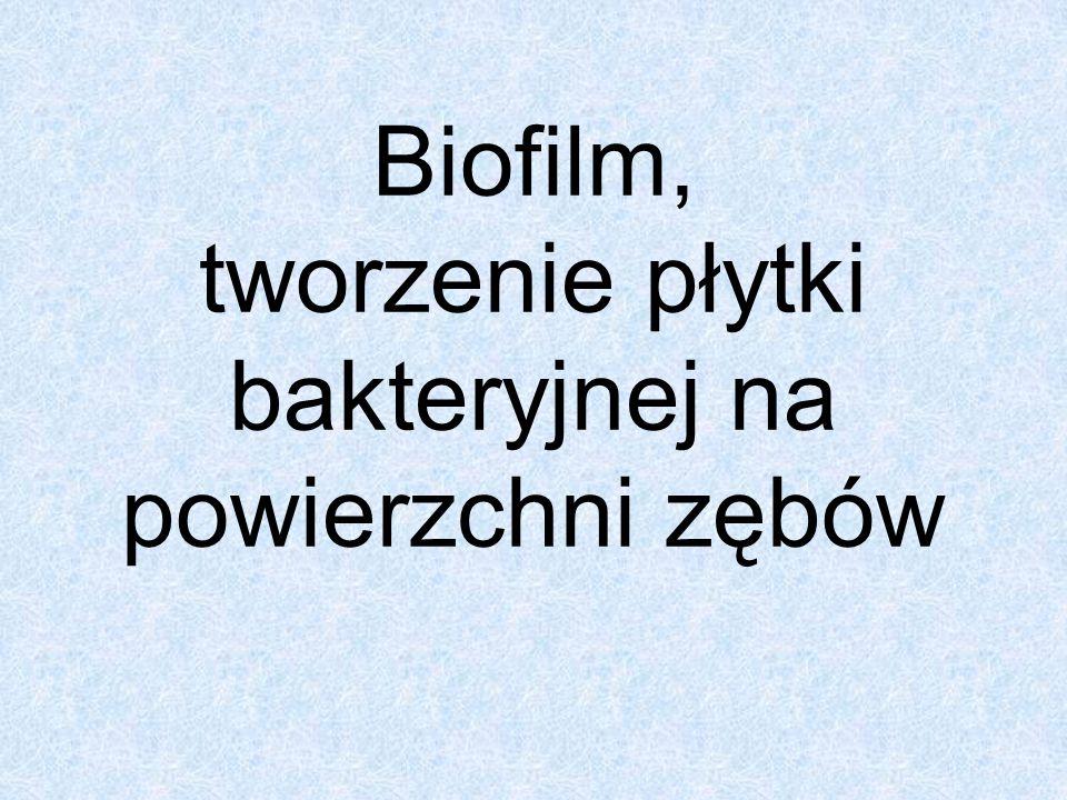 Biofilm, tworzenie płytki bakteryjnej na powierzchni zębów