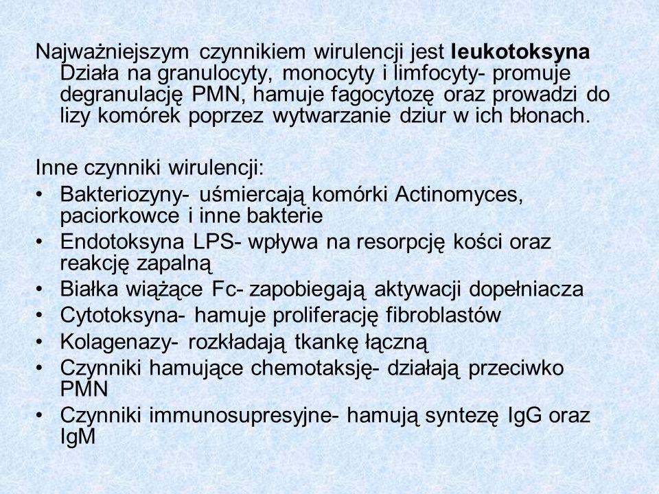 Najważniejszym czynnikiem wirulencji jest leukotoksyna Działa na granulocyty, monocyty i limfocyty- promuje degranulację PMN, hamuje fagocytozę oraz prowadzi do lizy komórek poprzez wytwarzanie dziur w ich błonach.