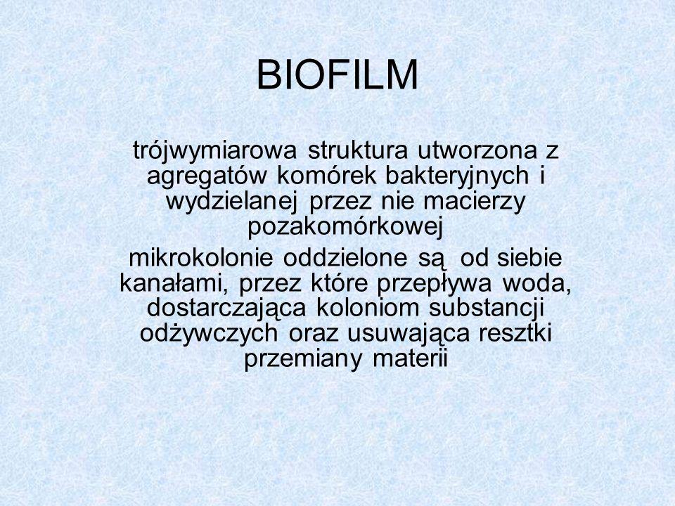 BIOFILM trójwymiarowa struktura utworzona z agregatów komórek bakteryjnych i wydzielanej przez nie macierzy pozakomórkowej.