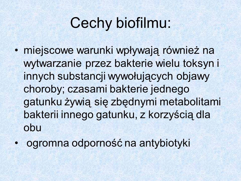 Cechy biofilmu: