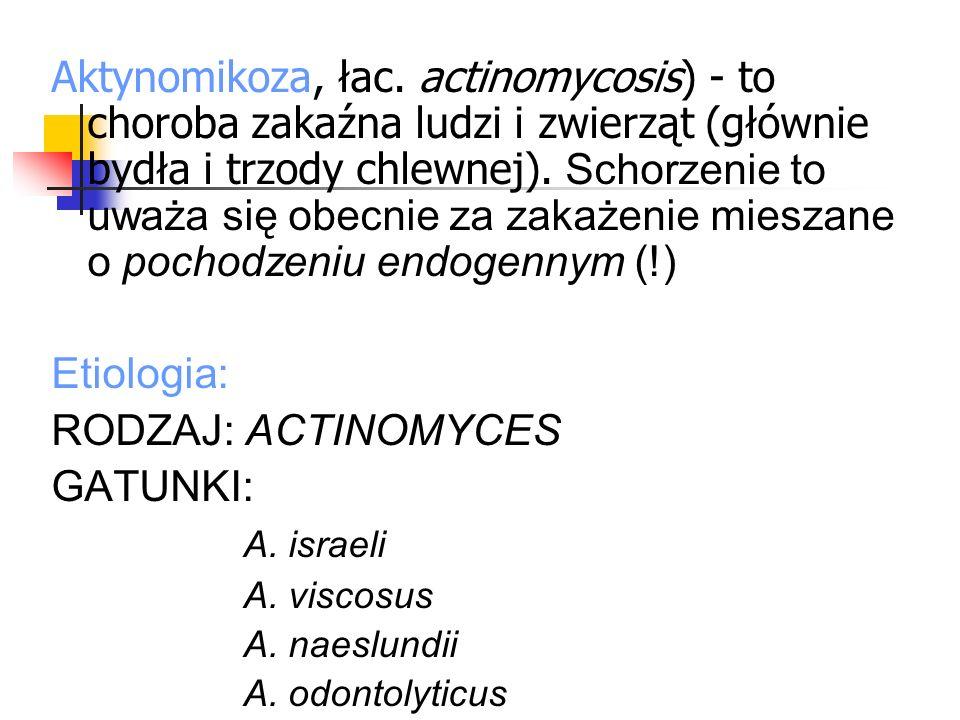 Aktynomikoza, łac. actinomycosis) - to choroba zakaźna ludzi i zwierząt (głównie bydła i trzody chlewnej). Schorzenie to uważa się obecnie za zakażenie mieszane o pochodzeniu endogennym (!)