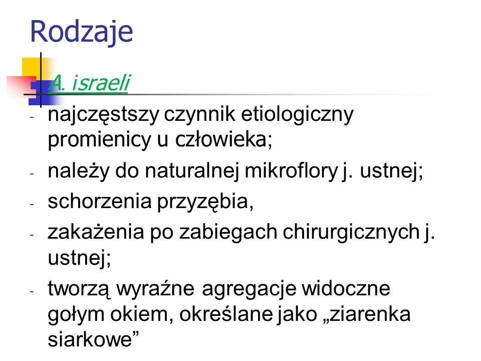 Rodzaje A. israeli. najczęstszy czynnik etiologiczny promienicy u człowieka; należy do naturalnej mikroflory j. ustnej;