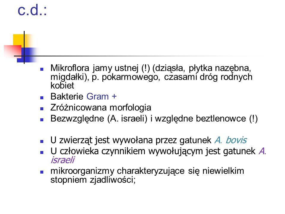 Czynniki etiologiczne promienicy c.d.: