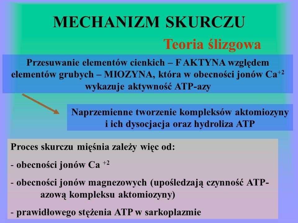 MECHANIZM SKURCZU Teoria ślizgowa