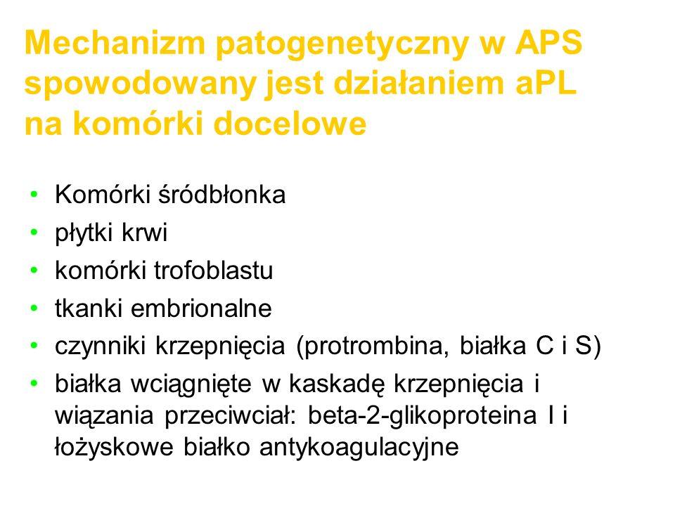 Mechanizm patogenetyczny w APS spowodowany jest działaniem aPL na komórki docelowe
