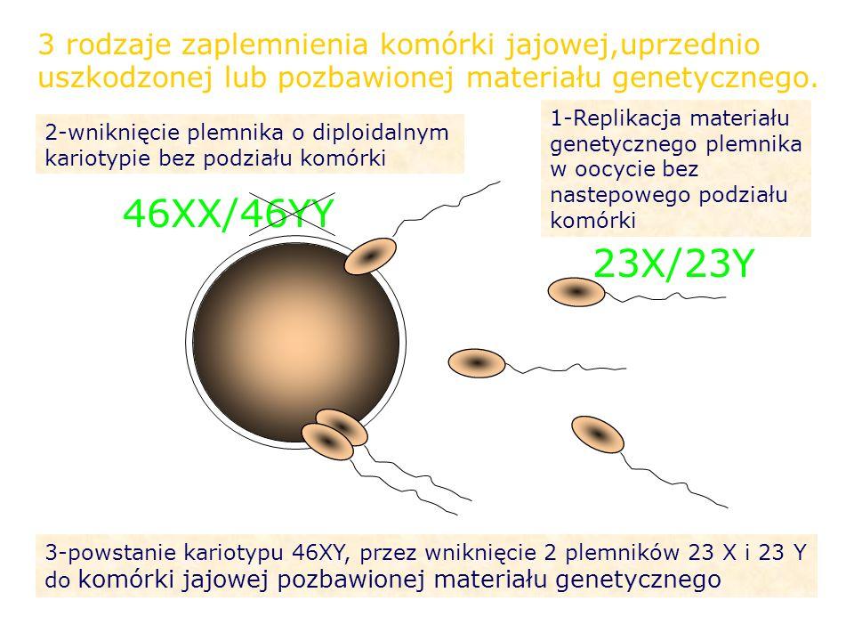 3 rodzaje zaplemnienia komórki jajowej,uprzednio uszkodzonej lub pozbawionej materiału genetycznego.