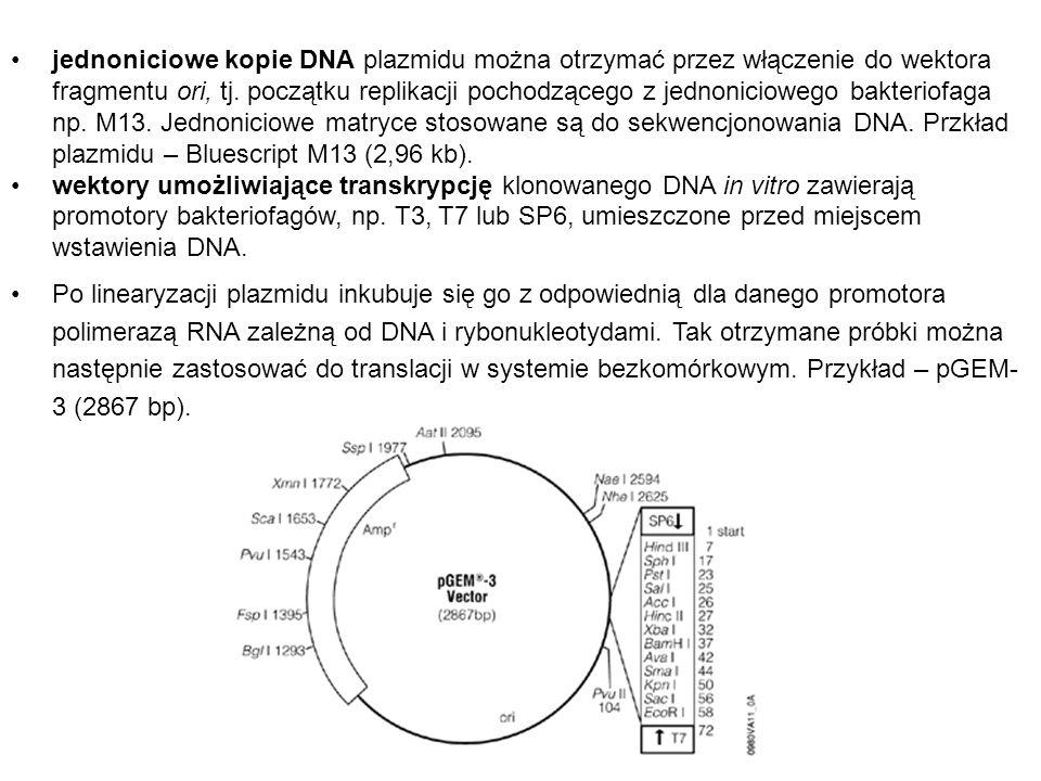 jednoniciowe kopie DNA plazmidu można otrzymać przez włączenie do wektora fragmentu ori, tj. początku replikacji pochodzącego z jednoniciowego bakteriofaga np. M13. Jednoniciowe matryce stosowane są do sekwencjonowania DNA. Przkład plazmidu – Bluescript M13 (2,96 kb).