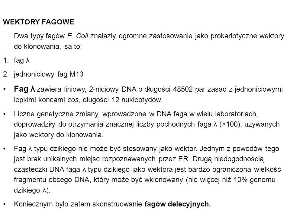 WEKTORY FAGOWE Dwa typy fagów E. Coli znalazły ogromne zastosowanie jako prokariotyczne wektory do klonowania, są to: