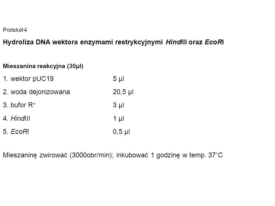 Hydroliza DNA wektora enzymami restrykcyjnymi HindIII oraz EcoRI