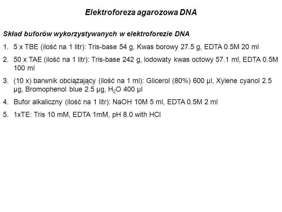 Elektroforeza agarozowa DNA