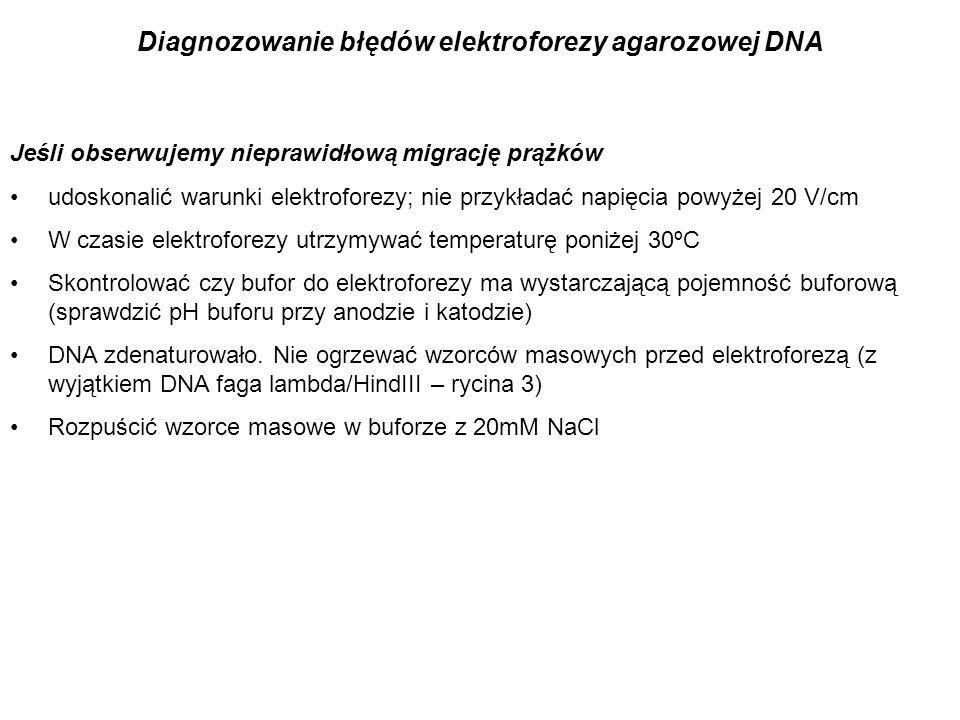 Diagnozowanie błędów elektroforezy agarozowej DNA