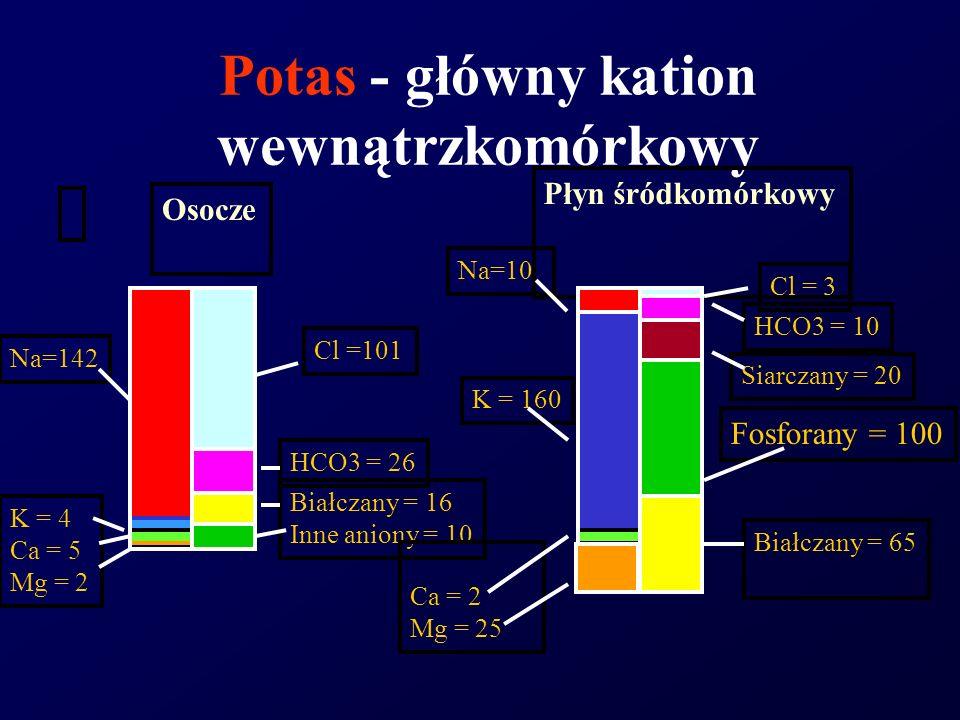 Potas - główny kation wewnątrzkomórkowy