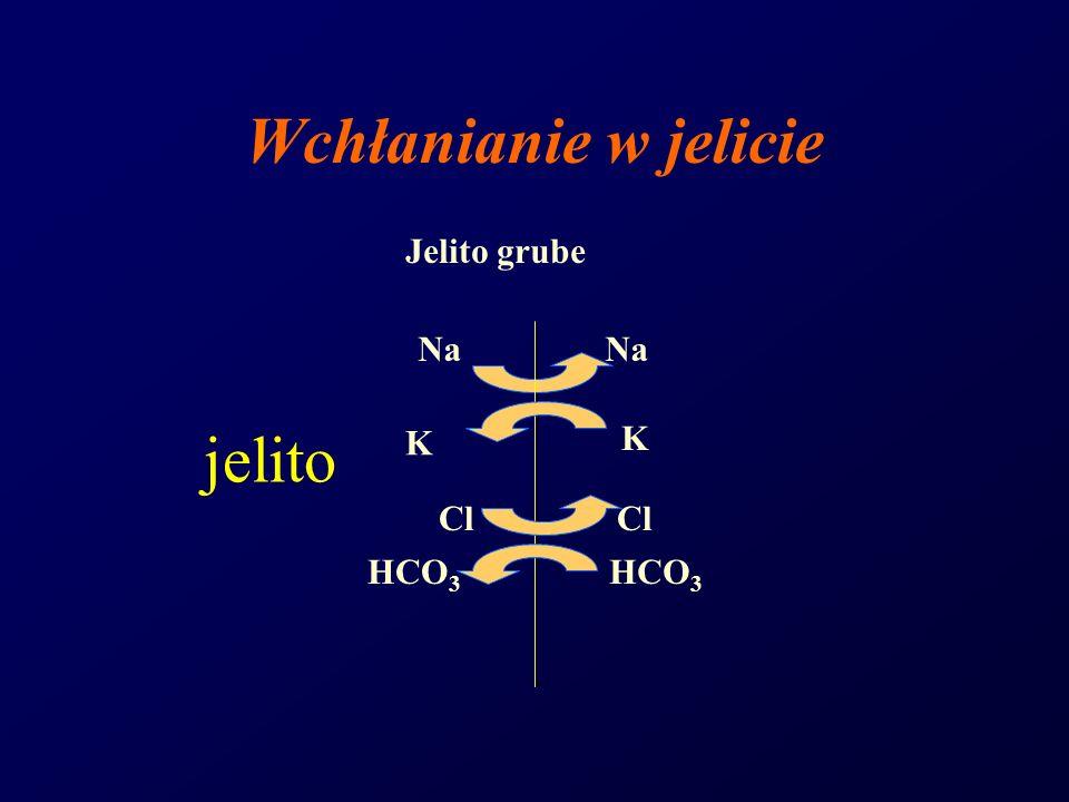 Wchłanianie w jelicie Jelito grube Na HCO3 Cl K jelito
