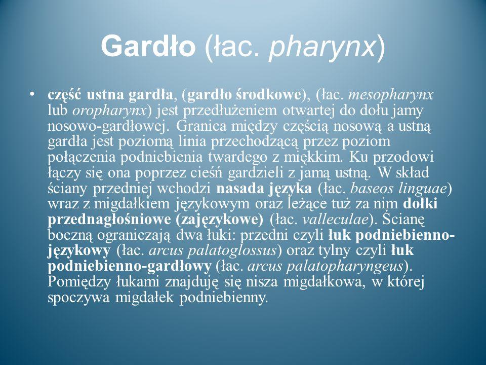 Gardło (łac. pharynx)