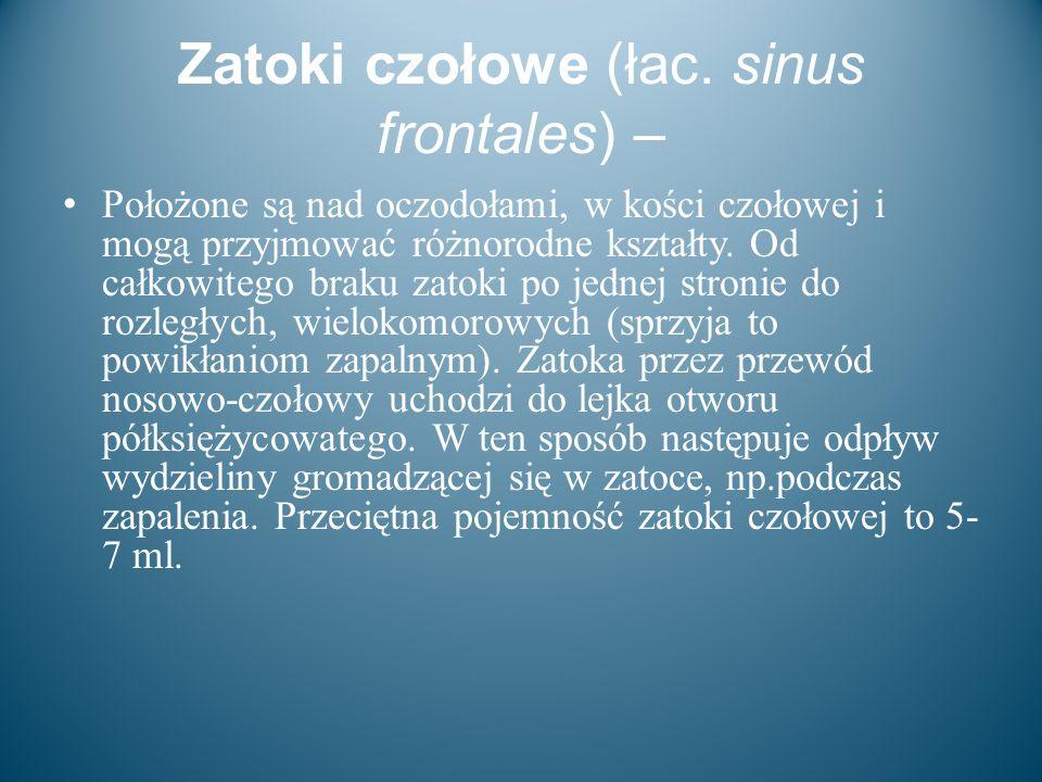 Zatoki czołowe (łac. sinus frontales) –