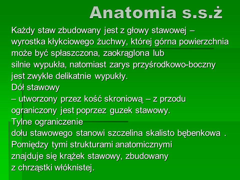 Anatomia s.s.ż Każdy staw zbudowany jest z głowy stawowej –