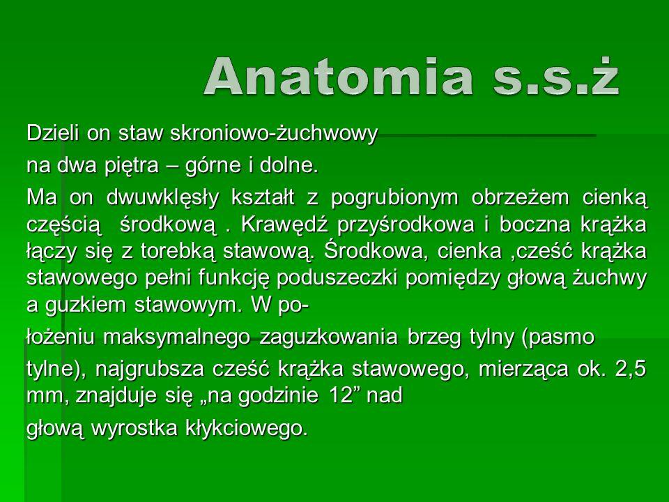 Anatomia s.s.ż Dzieli on staw skroniowo-żuchwowy