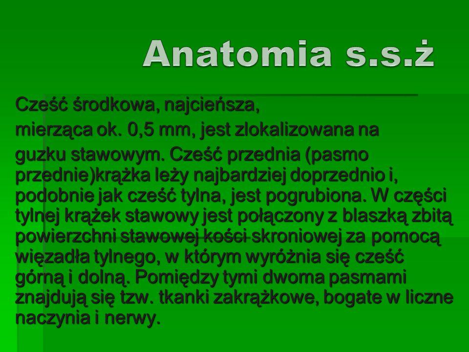 Anatomia s.s.ż Cześć środkowa, najcieńsza,
