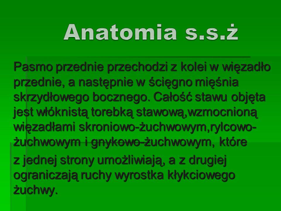 Anatomia s.s.ż