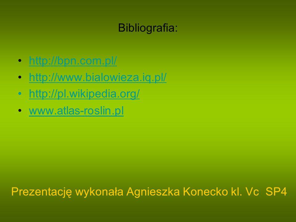 Bibliografia: http://bpn.com.pl/ http://www.bialowieza.iq.pl/ http://pl.wikipedia.org/ www.atlas-roslin.pl.