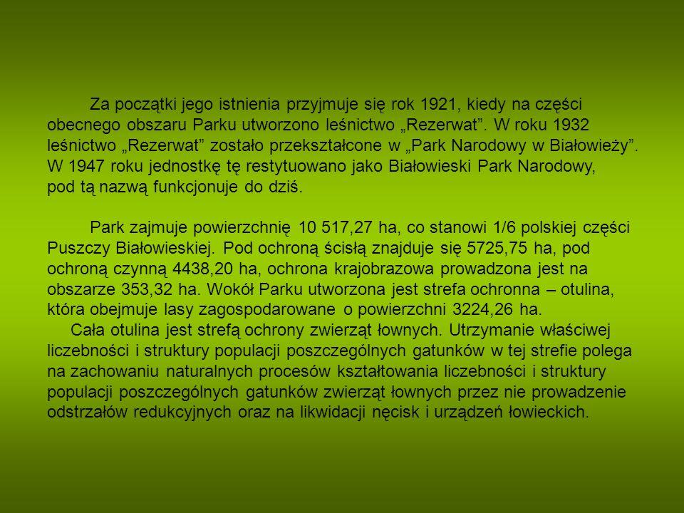 """Za początki jego istnienia przyjmuje się rok 1921, kiedy na części obecnego obszaru Parku utworzono leśnictwo """"Rezerwat ."""