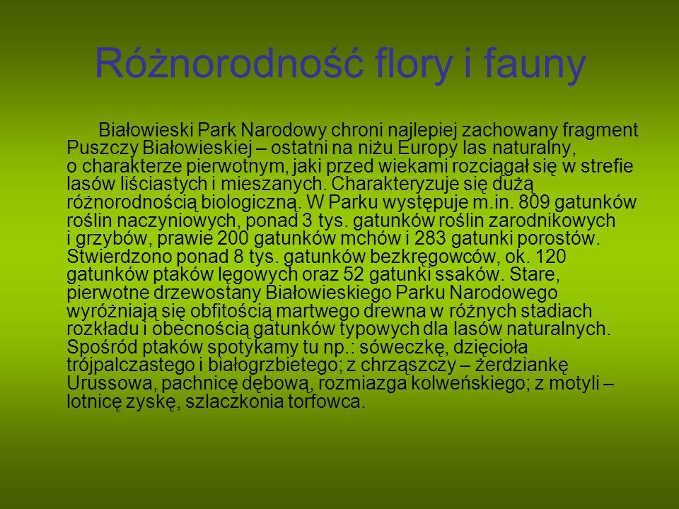 Różnorodność flory i fauny