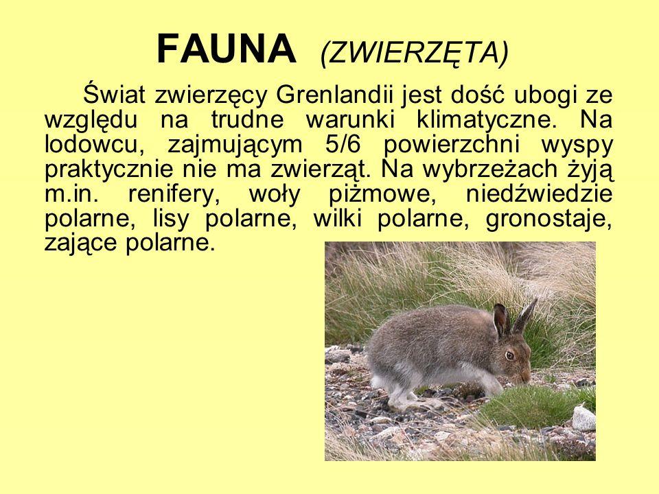 FAUNA (ZWIERZĘTA)